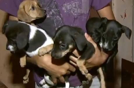 O adolescente resgata das ruas filhotes de cachorros doentes ou abandonados