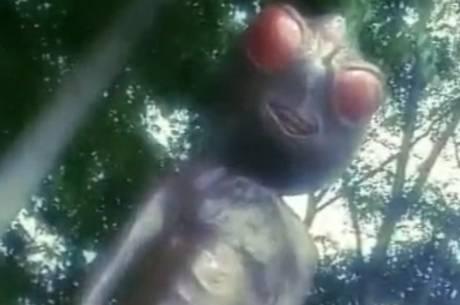 Criaturas estão por toda a cidade, ao menos em forma de estátua