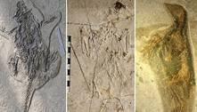 Cientistas descobrem 'Pompeia animal' na China