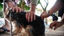 Rio registra primeiro caso de raiva em cão desde 1995