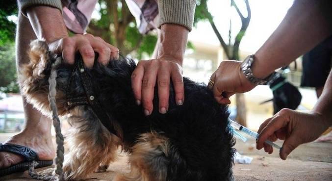 Cachorro morre infectado por raiva em Duque de Caxias; Rio confirma diagnóstico