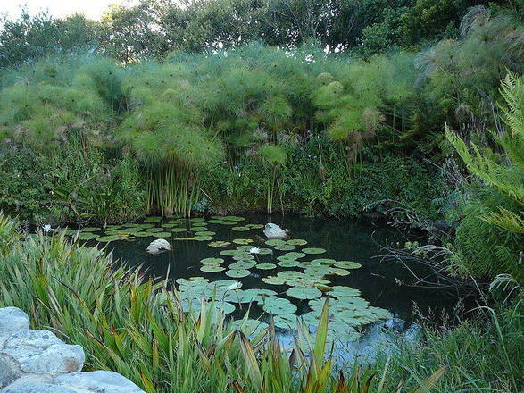 O jardim Kirstenbosch fica na Cidade do Cabo, na África do Sul - sanbi.org/gardens/kirstenbosch