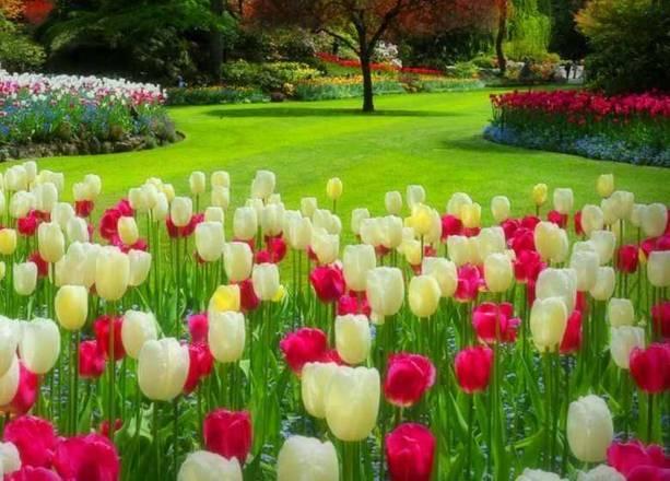 A National Geografic selecionou os 10 jardins mais lindos do mundo para se visitar. A lista está no livro National Geographic Four Seasons.São locais impecáveis como o Butchart Gardens, Canadá, na foto ao lado. Veja os demais e saiba como programar sua visita