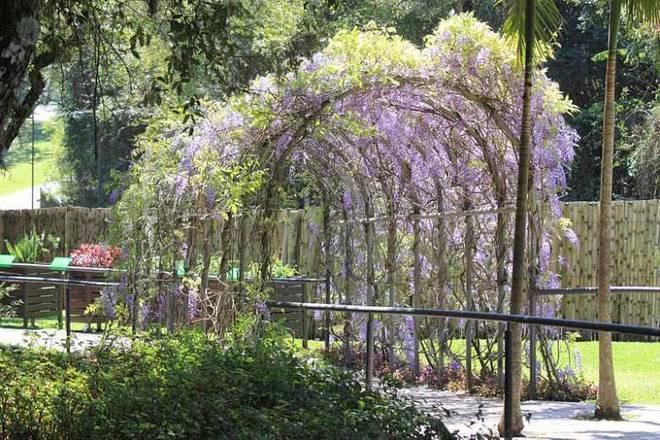 Curitiba (PR) é a representante brasileira da lista. O Jardim Botânico do local é imperdível - curitiba.pr.gov.br