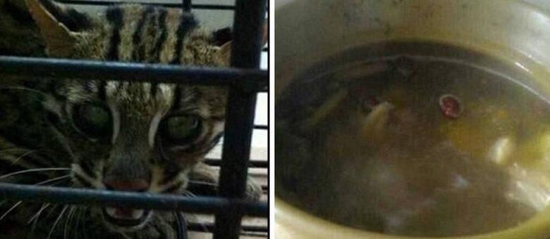 A chinesa publicava fotos enquanto cozinhava seu gato