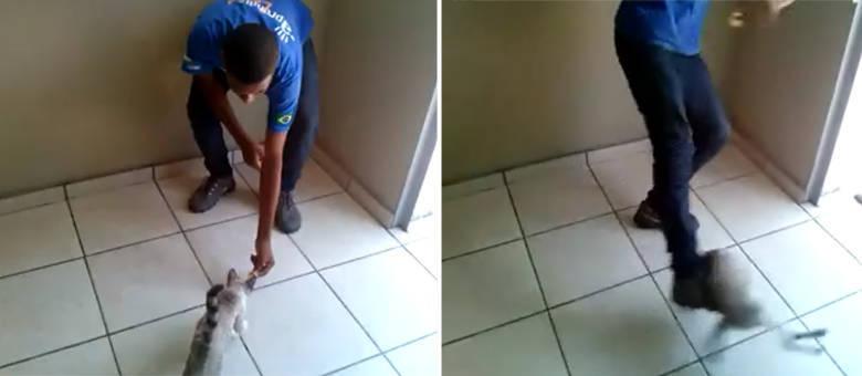 O jovem atraiu o gatinho com um petisco e, em seguida, acertou o animal com um forte chute
