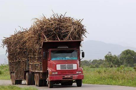 Mais da metade da cana-de-açúcar se destina à produção de etanol
