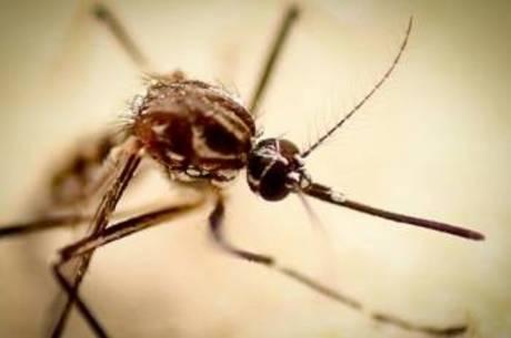 A Chikungunya é transmitida pelo Aedes aegypti