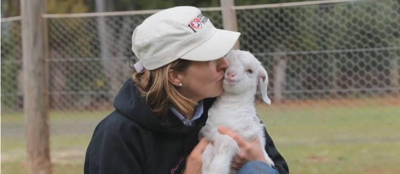 Filhote de cabra ganha nova vida ao receber uma cadeira de rodas de presente