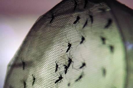 Minas já registra 140 mil casos da doença