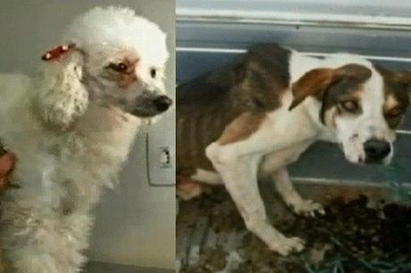 Um dos cães já foi adotado