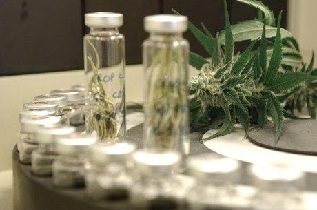 Medicamento a partir de maconha pode ser liberado no País