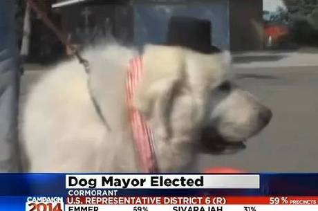 Cachorro pra PRESIDENTE!