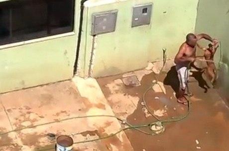 Após enforcar o cachorro e sufocá-lo com a água, o homem dá socos no animal