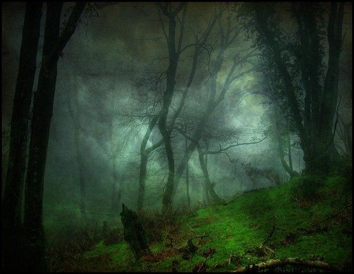 Mas por que tantos mistérios numa floresta de mata fechada, cheio de corredores e túneis naturais, com visual exuberante e sombrio, na Europa?