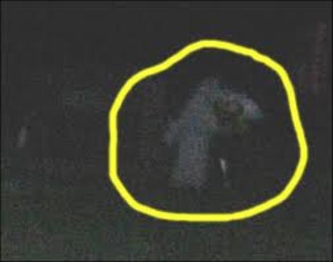 E as imagens desses fantasmas surgem às centenas. Visitantes contam que escutam vozes e gritos na floresta.