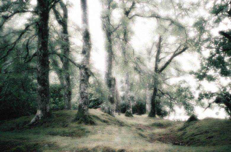 A floresta é, por fim, palco de gente que pratica rituais macabros