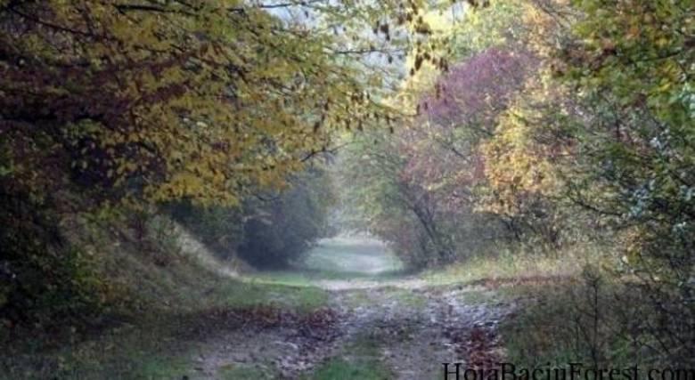 Outro relato dá conta de um mulher que se perdeu na floresta e foi encontrada muitos dias depois