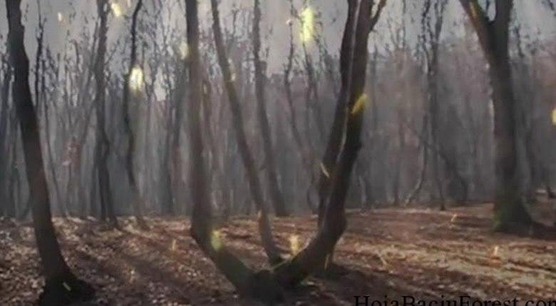 Os troncos das árvores dão a impressão de estarem petrificados. Muita gente vê luzes do nada e fotografa para mostrar