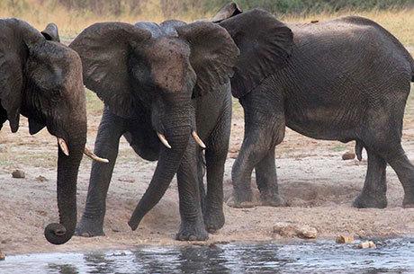 Elefantes são animais comuns na Índia
