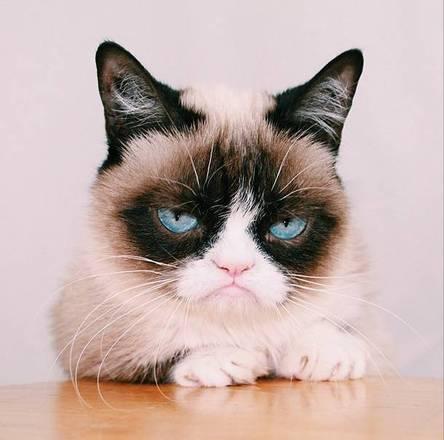 Resultado de imagem para gato fofo