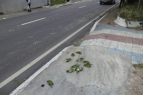 Passarinhos foram achados mortos em calçada de condomínio