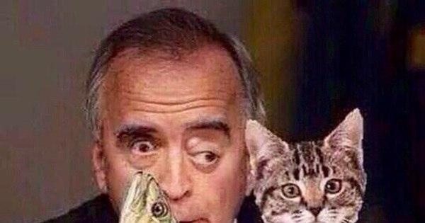 Eu e meu gato - 2 5