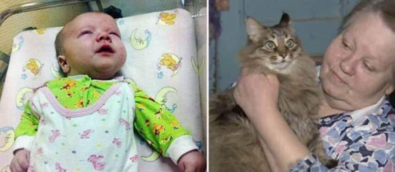 Gatinha entrou dentro da caixa em que bebê foi deixado para tentar aquecê-lo