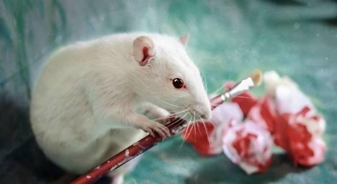 Rótulo também deverá especificar qual animal é utilizado nos testes