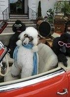 Uma voltinha com as amigas no meu carro conversível