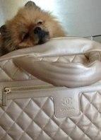 Amo minhas bolsas de grifes famosas