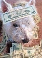 Dinheiro pra mim não é problema!