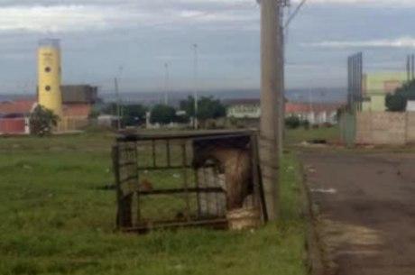 Cavalo era mantido nesta pequena gaiola em Samambaia
