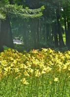 Quem visita o Parque Jacques Custeau, no Betânia, pode observar nascentes e a maior produção de plantas ornamentais de BH. Lugar ideal para trilhas ecológicas. Quem diria que esse lugar já foi depósito de lixo? <br>