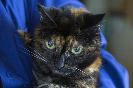 Gato mais velho do mundo morre aos 27 anos