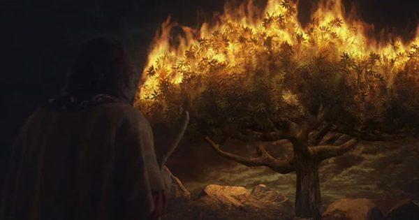 O Anjo, a sarça e o profeta: Quem é o Profeta semelhante a Moisés? E quem é o Anjo do SENHOR (Êxodo 23)?