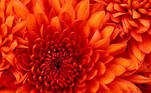 flor laranja_jpg