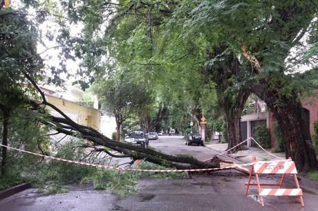 Queda de árvore na região de Pinheiros, zona oeste da capital