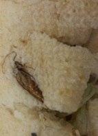 Até barata foi encontrada em um sanduíche de uma rede de fast food no DF