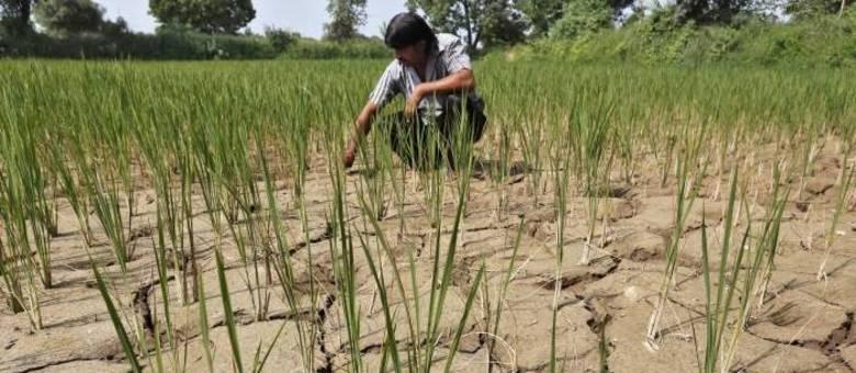 Aumento da temperatura global está gerando secas e afetando a produção de alimentos