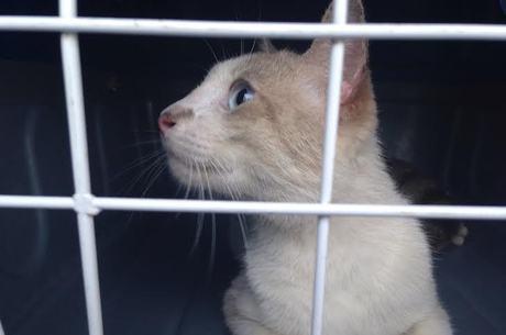 Com olhar atento, gato é recolhido para tratamento