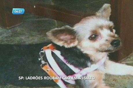 Cachorrinha foi levada de dentro de casa durante assalto