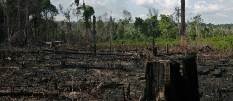 "Site oficial do fundo TIAA-CREF afirma que o mercado de terras no Brasil é uma ""oportunidade crescente"" e que os investimentos da empresa no País ""beneficia as comunidades locais"""