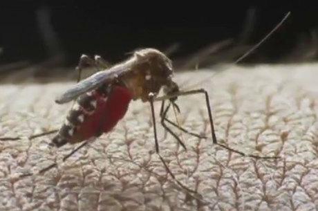 O ministério da Saúde chegou ao número mínimo de 497.593 casos de zika vírus e máximo de 1.482.701