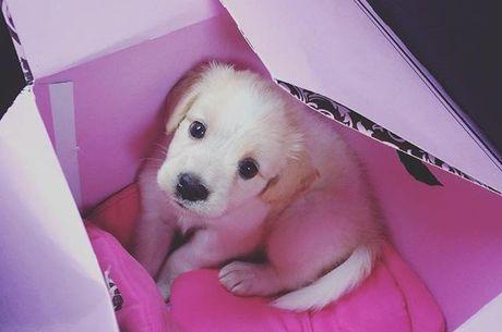 Apresentadora mostrou o cachorrinho em uma caixa de presente