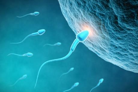 Produtos químicos influenciam fertilidade masculina