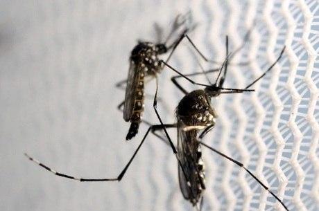 A partir de hoje (15) até quinta-feira (18), 55 mil militares treinados irão combater o Aedes aegypti