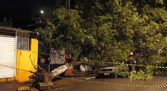 Queda de árvore na Avenida Parada Pinto, na Vila Nova Cachoeirinha, durante o temporal que atingiu a cidade de São Paulo, SP, na noite desta sexta-feira (20) e madrugada de sábado (21)