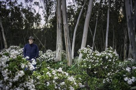 Richard Louv lança livro A Última Criança na Natureza no Brasil nesta semana