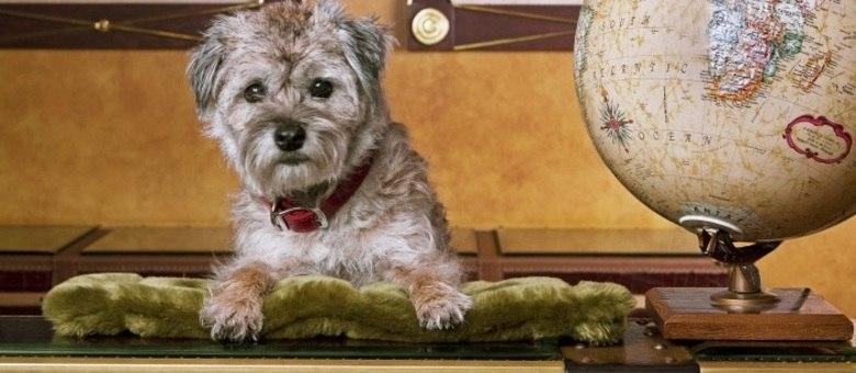 Philly tem hotel da rede Kimpton que ajuda a salvar cães abandonados, ao encontrar lar para eles
